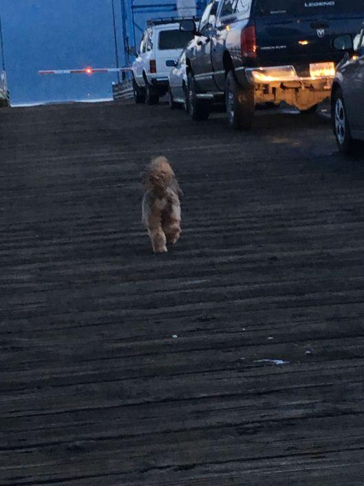 ginger on dock.jpg