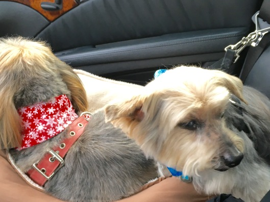bud and ging in car