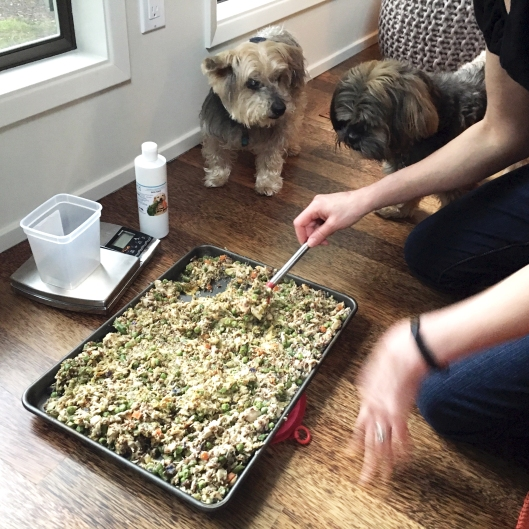 PS_B G watching plated