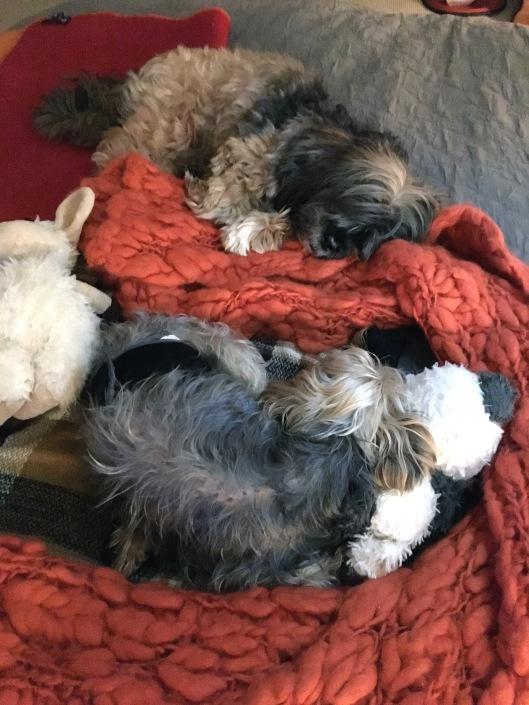 p_pups napping