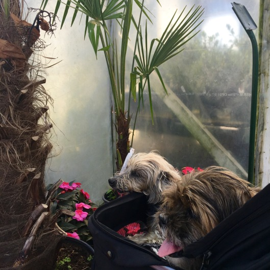 Buddy and Ginger in jungle